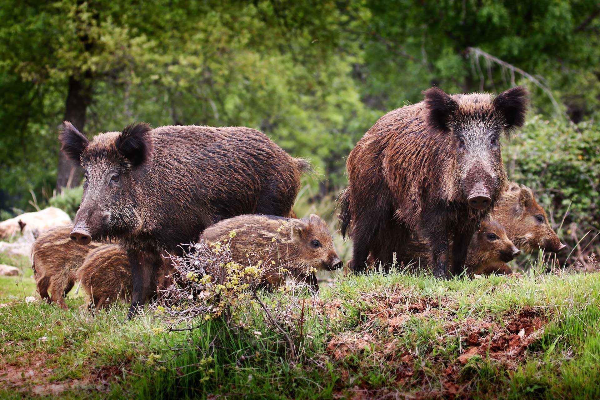 Fauna selvatica, può continuare attività di controllo della Regione