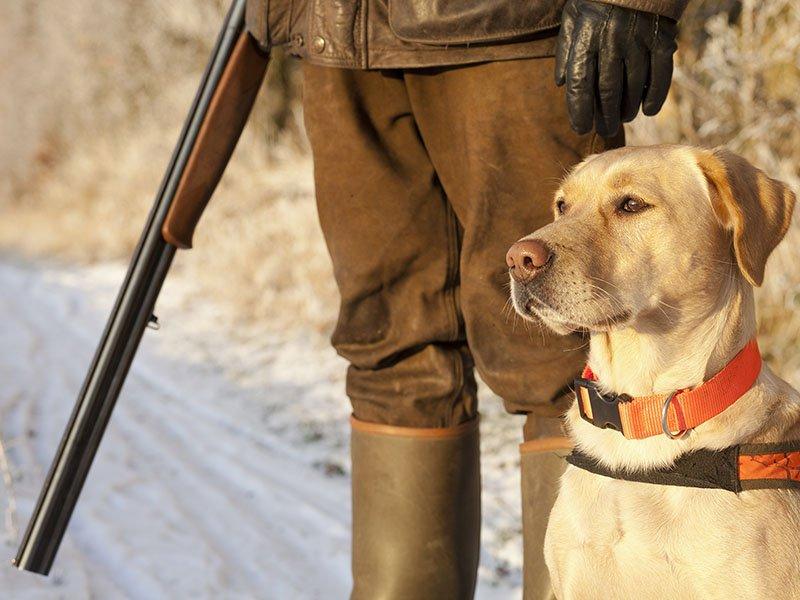 Emergenza ungulati a Pistoia. Stop alla caccia di selezione al cinghiale in area vocata, inizierà due mesi più tardi. Cia: «Traditi gli agricoltori»