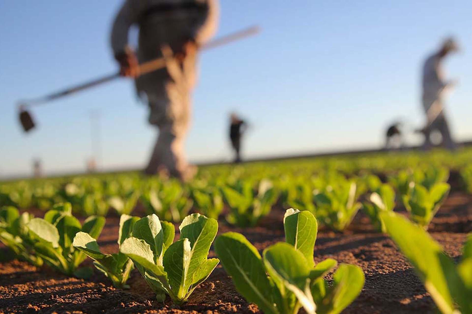 Bonus 800 euro per i dipendenti agricoli. Domande entro il 30 giugno 2021