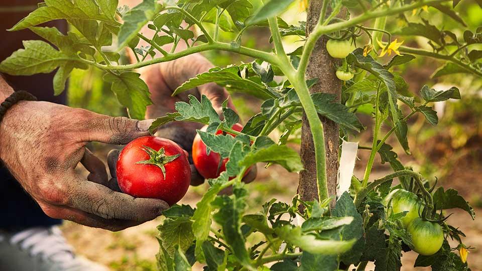 Servizi per l'agricoltura