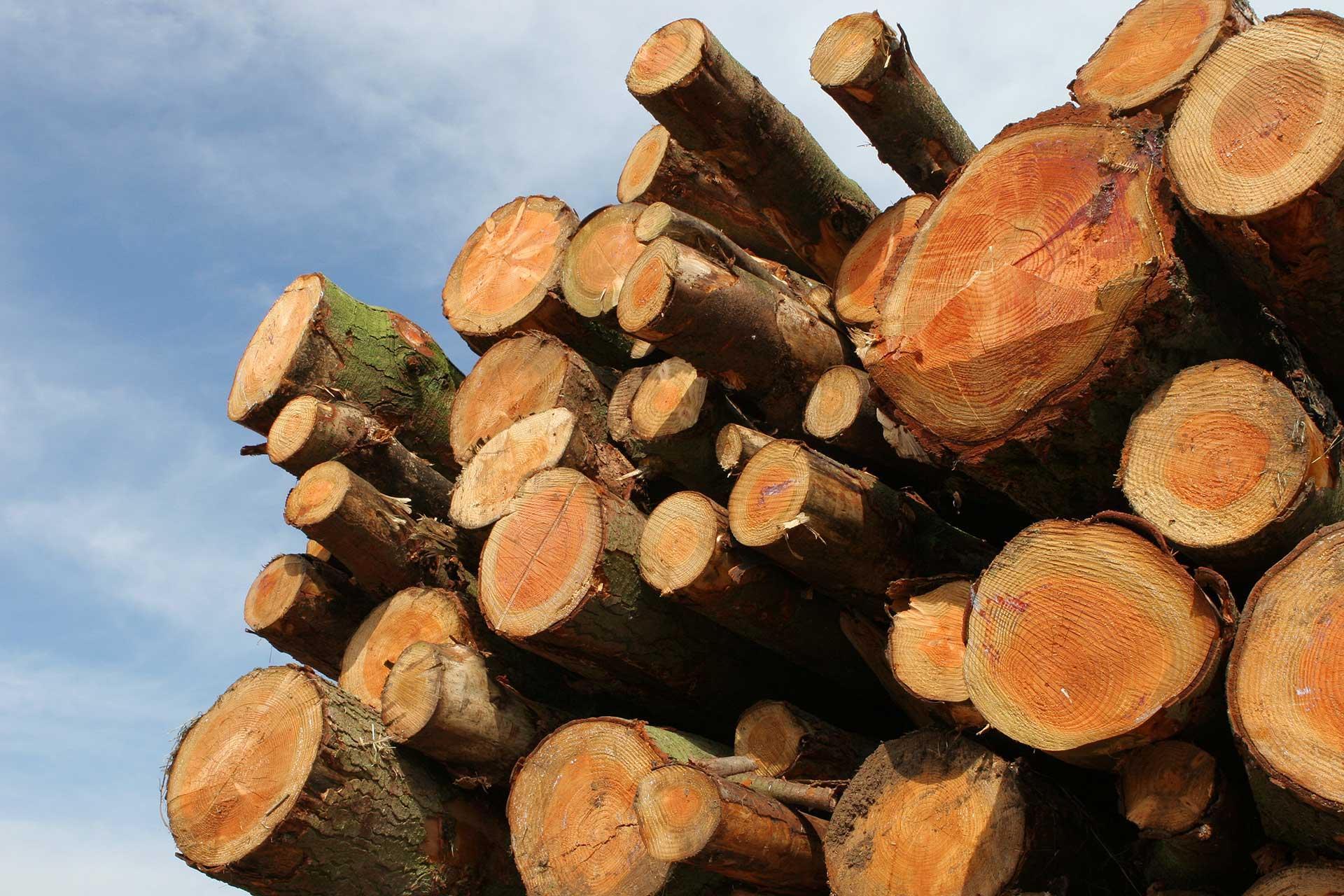 Montagna pistoiese. Strade chiuse, consegne saltate per le aziende forestali. Cia: «Situazione inaccettabile e intollerabile, serve senso di responsabilità dalle istituzioni»
