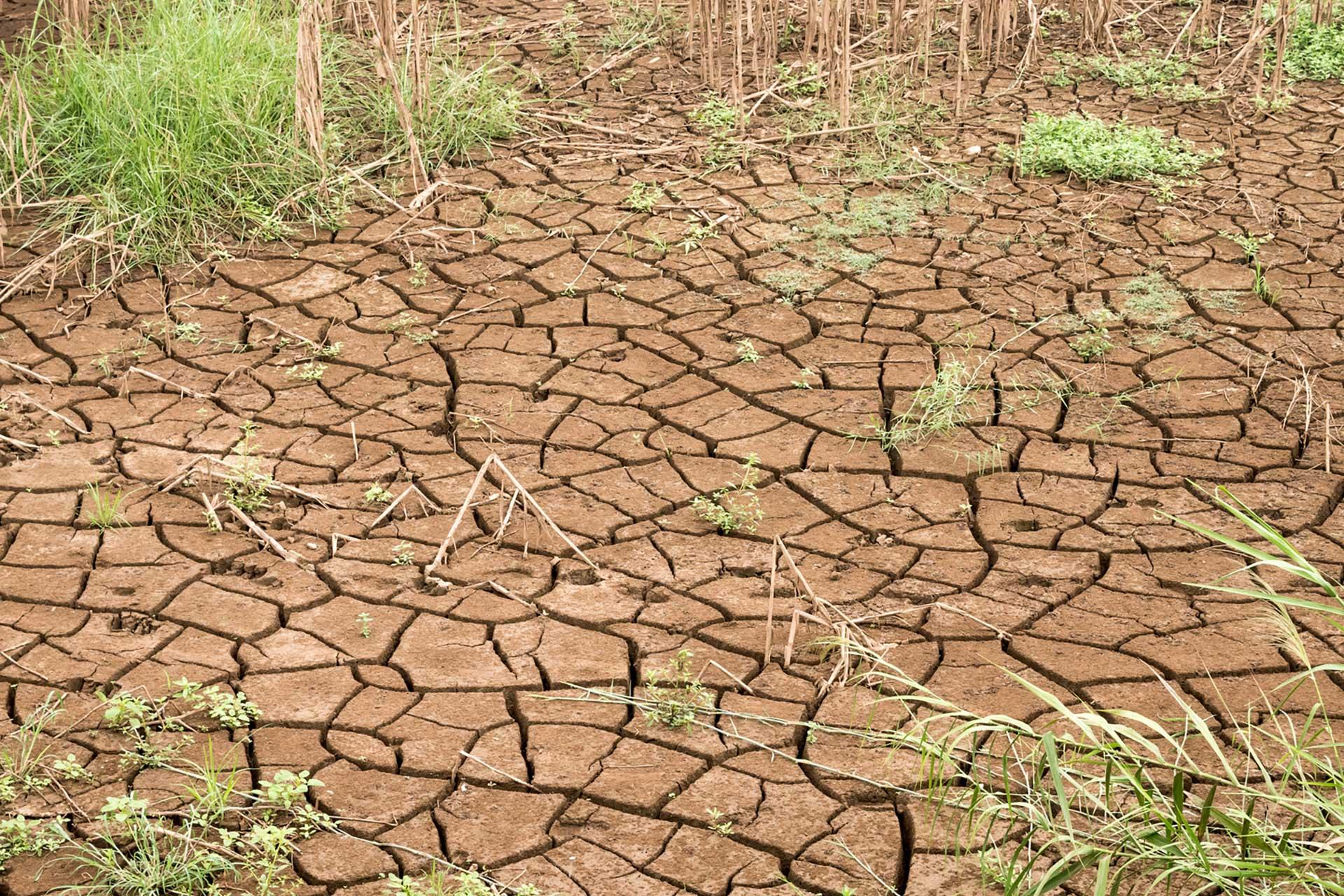 Artea. Apertura delle segnalazioni per la siccità 2021